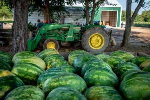 Watermelon Farm